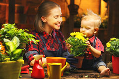 Family mother and baby grow flowers, transplant seedlings in gar. Family mother and baby son grow flowers, transplant seedlings in the gardeners greenhouse Stock Photos