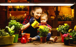 Family mother and baby grow flowers, transplant seedlings in gar. Family mother and baby son grow flowers, transplant seedlings in the gardeners greenhouse stock photography