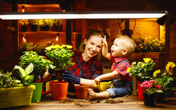 Family mother and baby grow flowers, transplant seedlings in gar Stock Photos