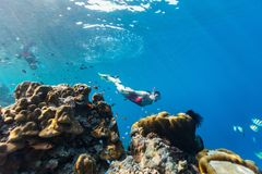 Family mother and daughter snorkeling. Underwater photo of family mother and daughter snorkeling in a clear tropical water at coral reef Royalty Free Stock Image