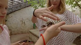 Family, mother and daughter walking in garden butterflies in Crimea stock video footage