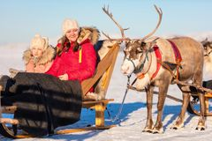 Reindeer safari Royalty Free Stock Image