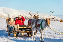 Reindeer safari Stock Photography