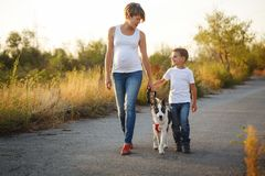 Family. Mother and son are walking with a dog. A family. A pregnant mother and son are walking with a pet. Purebred puppy Laika Royalty Free Stock Photography