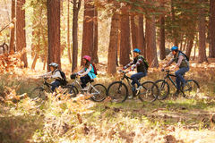 Family mountain biking on forest trail, Big Bear, California Royalty Free Stock Photo
