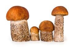 Family of mushrooms Stock Photos