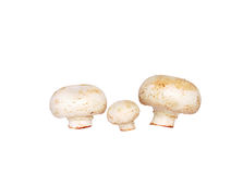 Family mushrooms. On a white background Royalty Free Stock Image