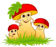 Family of mushrooms. Family of mushrooms on a grass. Isolated on white. Cartoon  illustration Stock Image