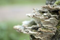 Family of mushrooms, background, texture, closeup. Selective focus stock photo