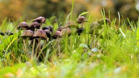 Family of mushrooms stock photo