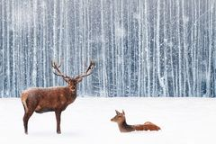 Family of noble deer in a snowy winter forest. Christmas fantasy image in blue and white color royalty free stock photography