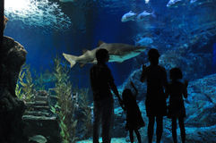Family in oceanarium Royalty Free Stock Image