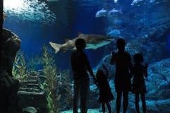 Family in oceanarium Royalty Free Stock Image