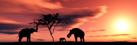 Free Family Of Elephants Stock Images - 2242924