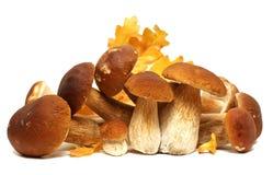 Family Of White Porcini. Wild Foraged Mushroom Selection Isolated On Background, With Shadow. Boletus Edulis Mushrooms
