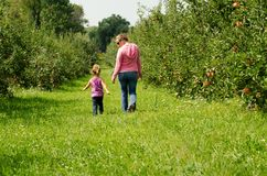 Family in an orchard. Mom and girl walking through an orchard Stock Photos