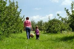 Family in an orchard. Mother and daughter carrying a bag of apples Stock Photography