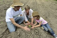 Family of organic farmers planting seedling Stock Photo