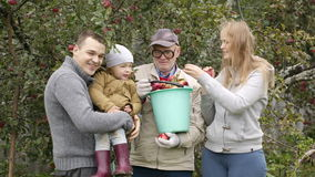 Family out collecting apples in the orchard stock video