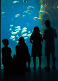 Family Outing at the Aquarium Royalty Free Stock Image