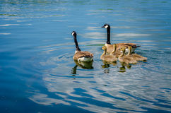 Family Outing Royalty Free Stock Images