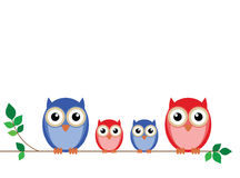 Family of owls Stock Photo