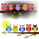 Family of owls sat on a tree branch. At night and day Royalty Free Stock Photography