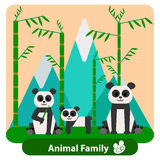 Family panda on the background of bamboo and Stock Photos
