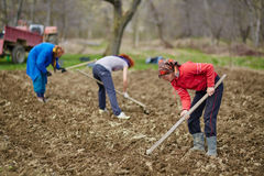 Family of peasants sowing potatoes Royalty Free Stock Images