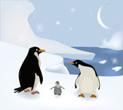 Family of penguins. The nature snow winter Stock Images