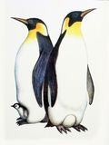 Family penguins. Drawing on the paper family penguins - male, female and nestling Stock Image