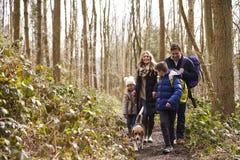 Family with pet dog walk through a wood, boy turning round Stock Photo