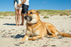 Family pet guard. Resting on the beach Royalty Free Stock Photos