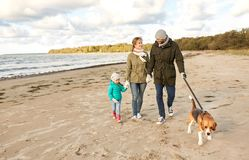 Happy family walking with beagle dog on beach. Family, pets and people concept - happy mother, father and little daughter walking with beagle dog on leash on stock images