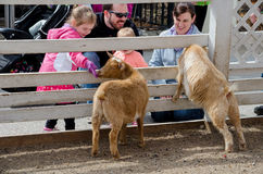 Family at a petting zoo Royalty Free Stock Image