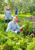 Family is picking carrot in field royalty free stock photos