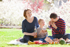 Family picnic. Cheerful family of three having a picnic with sandwiches and fruits outside together Royalty Free Stock Photography