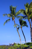 Family Picnic under Palm Fronds Stock Photos
