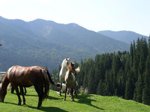 Family piknick. Horse's in nature Stock Photo