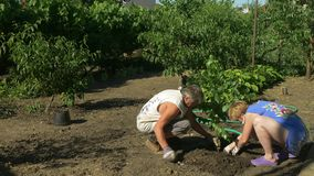 Family planting birch trees in garden. Peaches, vine and flowers on background