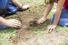 Family Planting Royalty Free Stock Photo