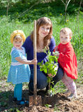 Family planting sprouts Stock Image