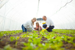 Family planting vegetables Stock Photos