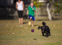 Family playing with dog Stock Photos