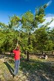 Family at plum harvest Stock Photos