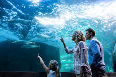 Family pointing a fish in a tank Royalty Free Stock Photography