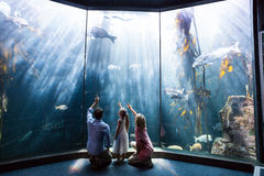 Family pointing a fish in the tank Stock Image