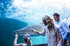 Family pointing a shark in a tank Royalty Free Stock Photos