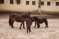 Family ponies Royalty Free Stock Photo