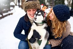 Family portrait of cute happy couple hugging with their alaskan malamute dog licking man`s face. Funny puppy wearing stock images